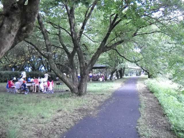 真夏の涼しい木陰